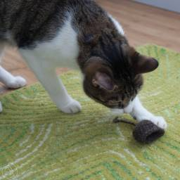 Buddy playing with a Tail End crochet cat toy