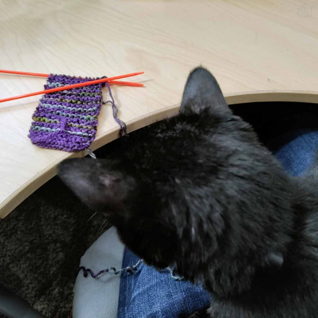 A black cat is sitting on a lap looking at the knitted swatch laying on a wooden desk.